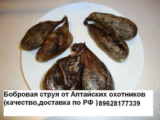 Продам Струя бобра от Алтайских охотников