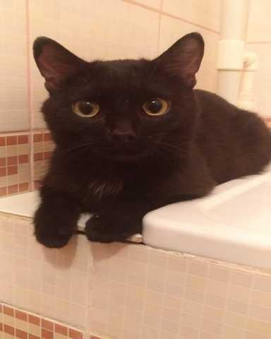 Отдам даром Ласковый котенька