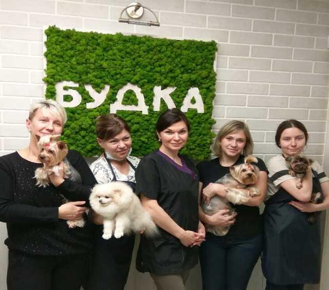 Предложение: Обучение стрижке собак
