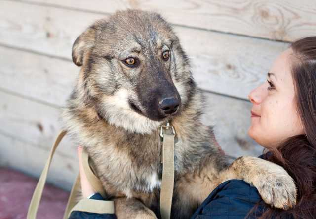 Отдам даром Очень пушистый и очень красивый щенок-по