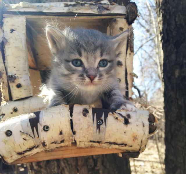 Отдам даром: Котёнок ищет приятелей!
