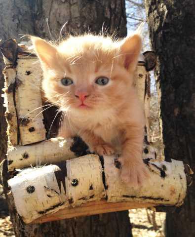 Отдам даром: Котёнок ищет друга!