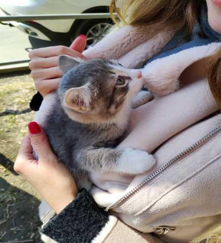 Отдам даром Два котенка 1,5 месяца