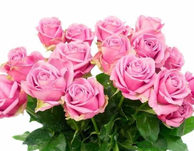 Продам Букет из 15 розовых роз