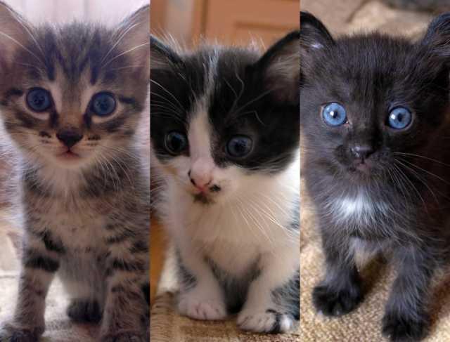 Отдам даром: Котята добрым людям