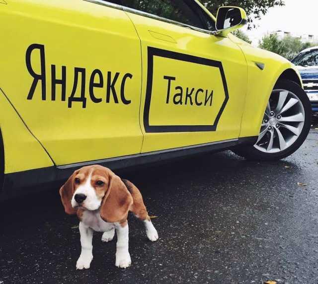 Вакансия: Яндекс.Такси Водитель