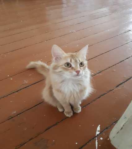 Отдам даром: Кота
