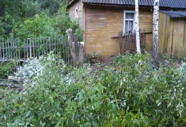 Предложение: Покос травы, вырубка кустарника, деревье