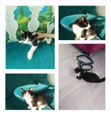 Отдам даром Отдам чистоплотного котенка