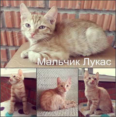 Отдам даром Ласковые и игривые котята 3 месяца