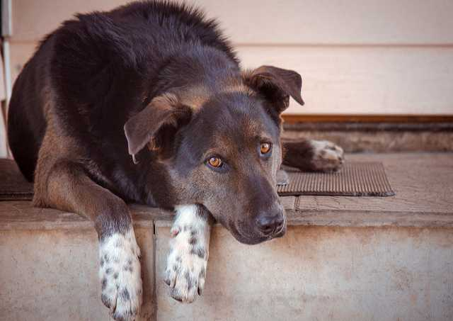 Отдам даром: Великолепный пес Амур ищет дом!