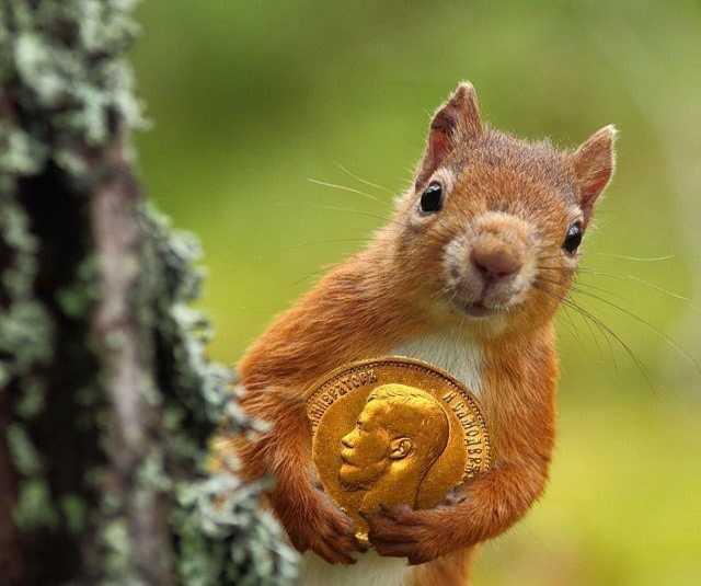 Куплю: Покупаем монеты, значки, медали дорого
