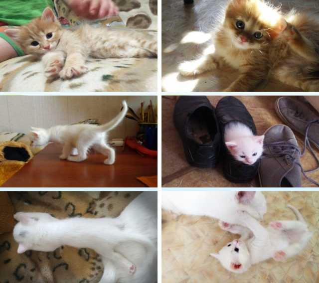 Отдам даром: Котятки лапочки!