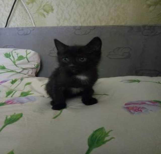 Продам Продаются котята