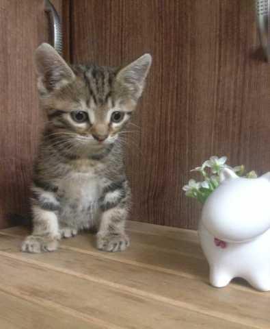 Отдам даром Милые умные воспитанные котики