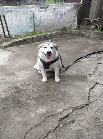 Отдам даром Собака