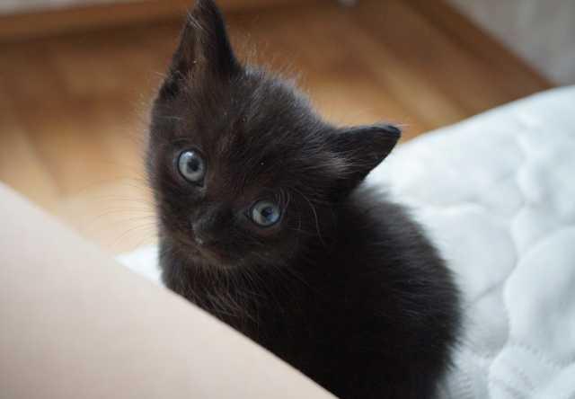 Отдам даром Котят в заботливые руки