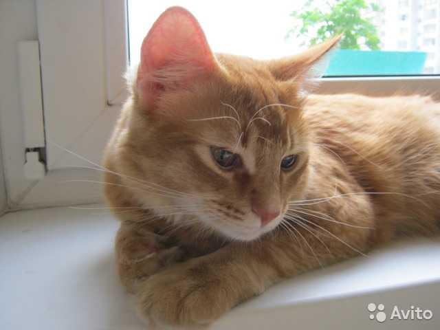 Предложение: Гостиница для кошки