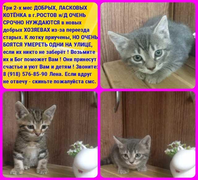 Отдам даром СРОЧНО ОТДАМ 3 милых котят в добрые руки