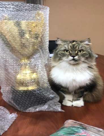 Отдам даром Кошка красивая