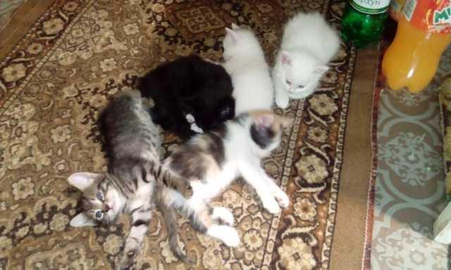 Отдам даром: котята-симпатяжки