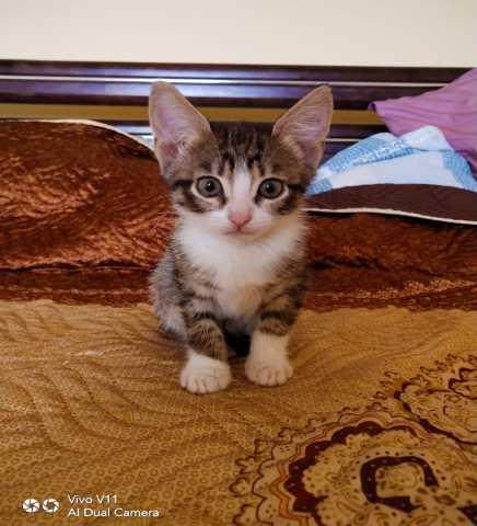 Отдам даром Четыре Чудо-котенка в Добрые руки