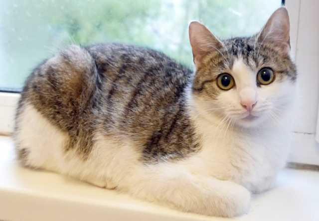 Продам молодой котик