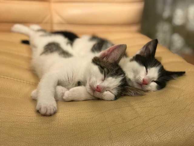 Отдам даром Три веселых и позитивных котенка