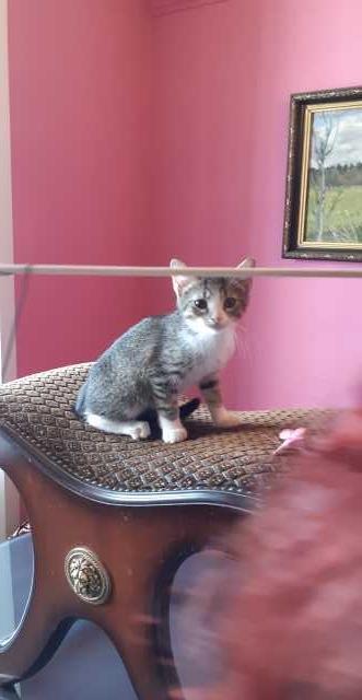 Отдам даром Красивые котята , ласковые , умные !!!
