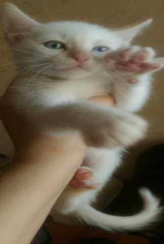 Отдам даром Отдам котят!!!