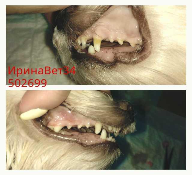 Предложение: Чистка зубов животным ультразвуком
