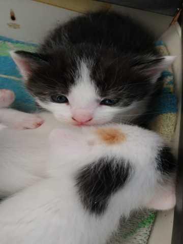 Продам: Котята в добрые руки