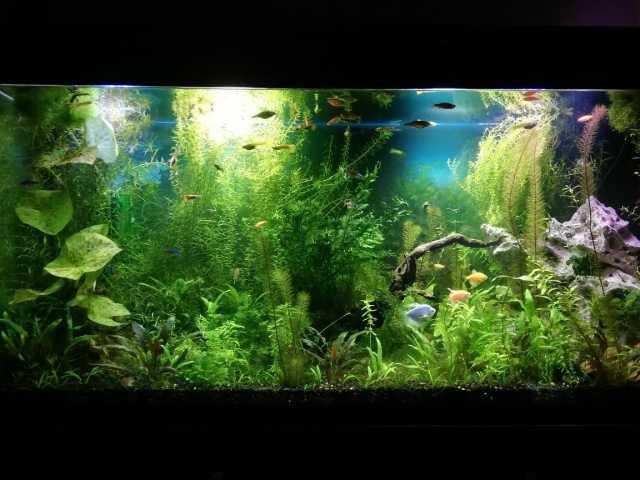 Продам Дизайн аквариума