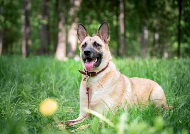Отдам даром Молодая, активная и очень добрая собака