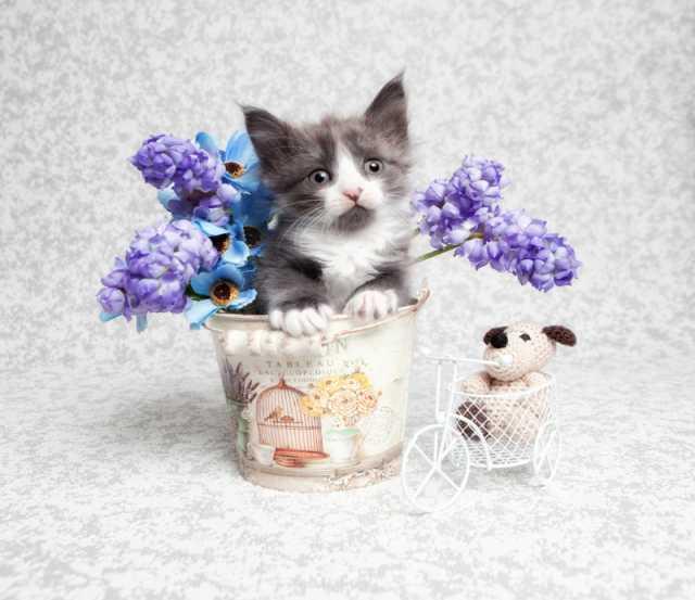 Отдам даром Милый котенок Гном ищет дом