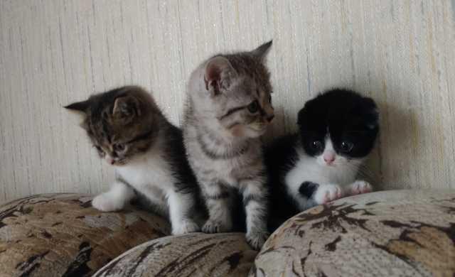 Продам: Милые котята