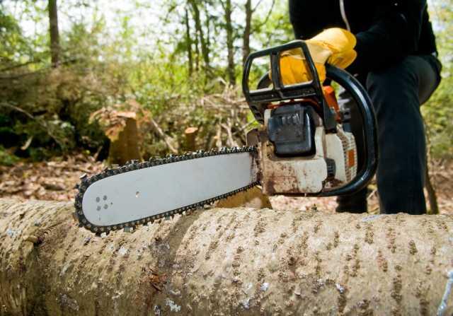 Предложение: Спил деревьев. Вышка. Уборка участков