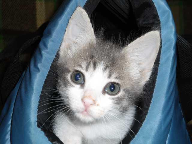 Отдам даром: крошечный котёнок в надёжные руки