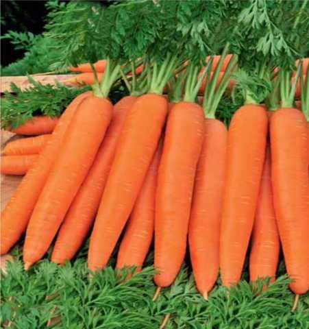 Отдам даром Морковь