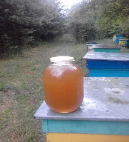 Продам Мёд лесной, урожай 2019 года