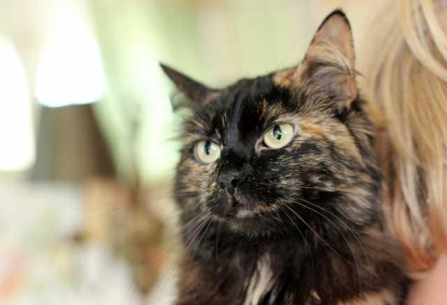 Отдам даром Живописная кошка Максимка в дар