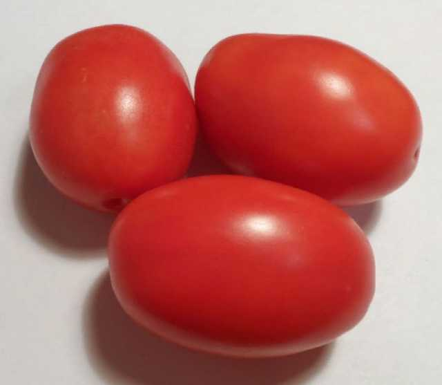 Продам Скороспелые томаты, арбузы, огурцы, дыни
