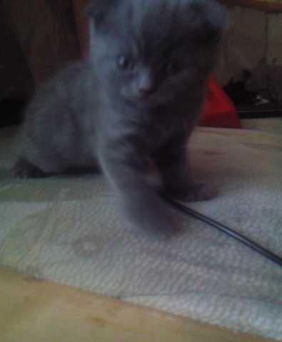 Продам: Плюшевые котята
