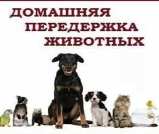 Предложение: передержка животных