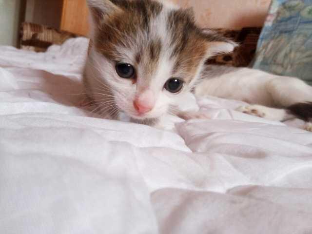 Отдам даром кошку. котенка