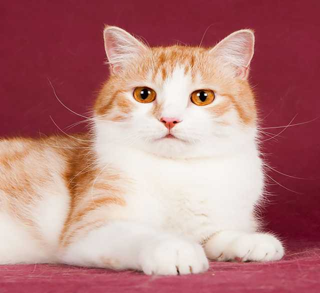 Отдам даром Ищет дом и семью котик Лёлик!