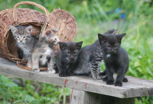 Продам: Кошки из лукошка