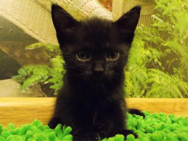 Отдам даром Отдам котенка