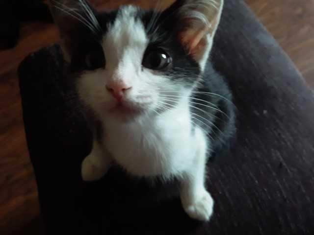 Продам Котёнок-девочка