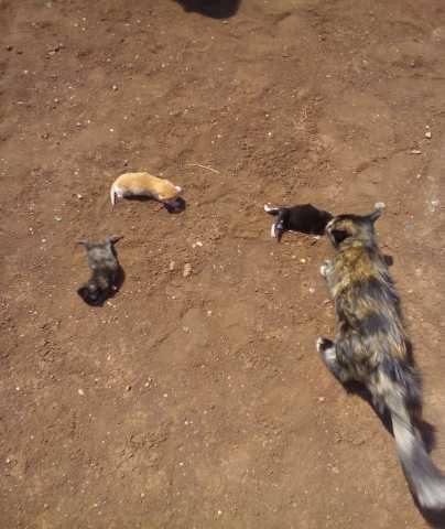 Отдам даром: Котта